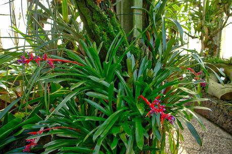 Botanical Gardens Berlin