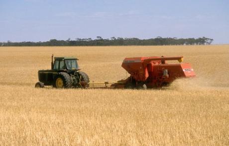 Australia Wheat Production
