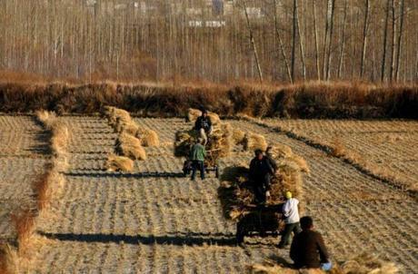 China Wheat Production
