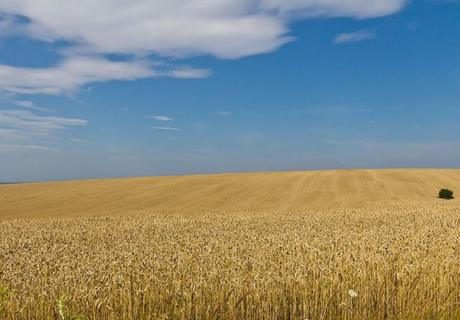 Ukraine Wheat Production