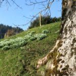 Spring Equinox Celebration in the Paracelsus Centre Einsiedeln