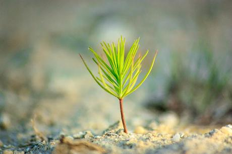 #TreeEra #TreePlanting to reduce #CarbonEmissions and #ClimateChange