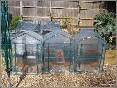 Getting the best from your mini-greenhouse