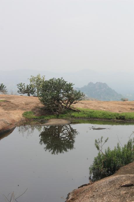 DAILY PHOTO: Bush on a Mountaintop, Ramanagara