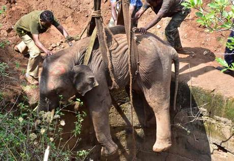 great rescue of elephant that fell into 50 feet well in Coimbatore ! Kudos !!