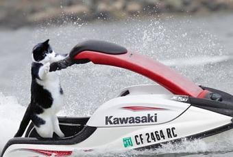 Top 10 Action Packed Cats Doing Extreme Sports Paperblog