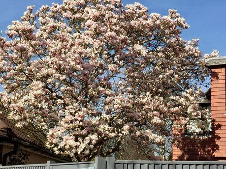 Look Up and Smell the Blossom