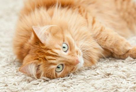 What are the daily problems of Cat Owners and how to fix them