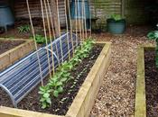 Supporting Broad Beans