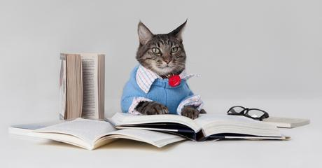 Are Cats Intelligent? Which pet is smarter?