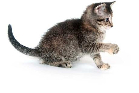 What is cat kneading and why do cats knead their owners?