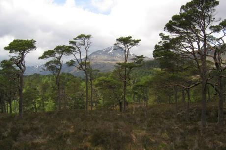 Affric Forest, Scotland
