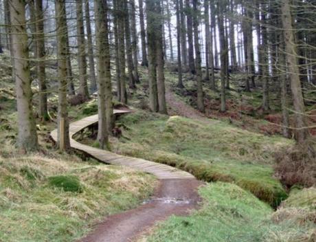 Kielder Forest Park, England