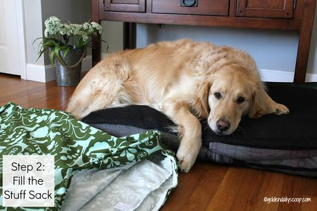 golden retriever dog laying on molly mutt stuff sack