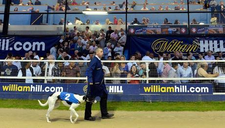 Greyhound at Wimbledon ... and euthanised at NSW