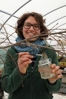 Conservation breakthrough for Scotland's rare aspen tree