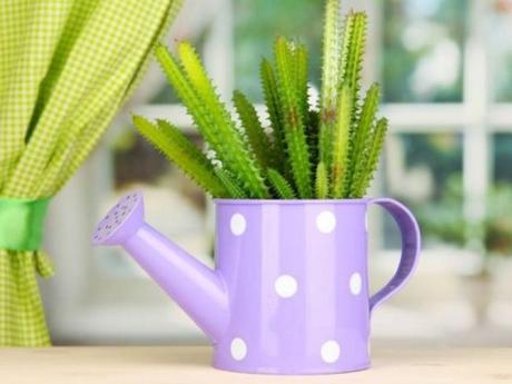 Cactus/Succulents