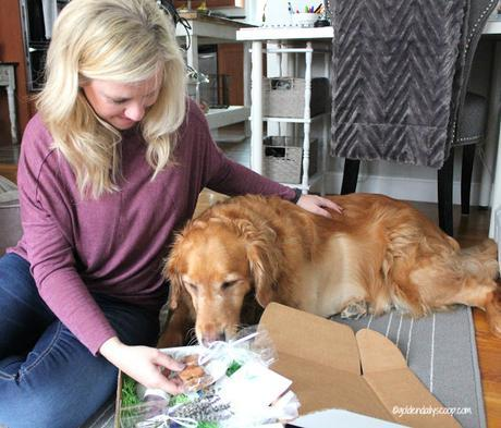 unboxing the nurturing paw subscription box of healthy and organic items for dogs and their owners