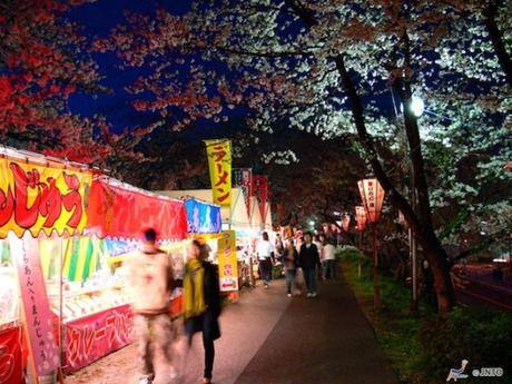 Top Tips for Cherry Blossom in Japan