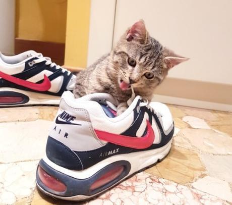 Nike Cat Costume
