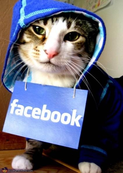 Facebook Cat Costume