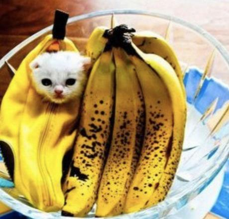 Chiquita Banana Cat Costume