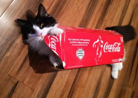Coca-Cola Cat Costume