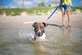Taking the plunge with dogs and kids: Part 2