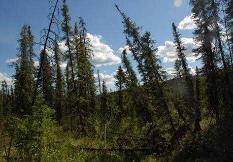 Earth's melting permafrost threatens to unleash a dangerous climate feedback loop