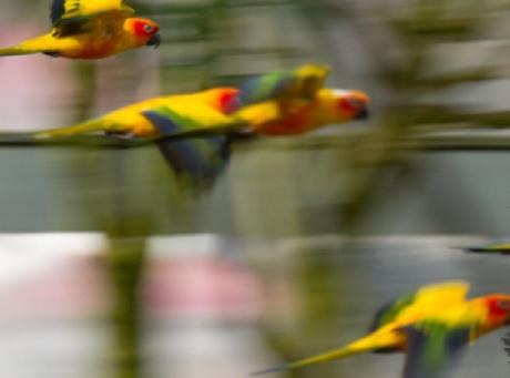 The Top 10 Fastest Animals in the Air