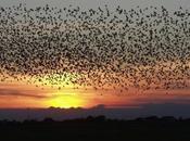 Most Common Birds