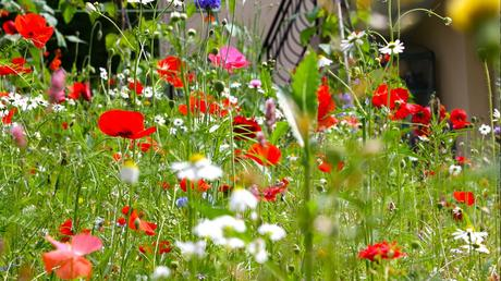 managing a wildflower meadow