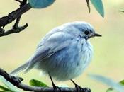 Rarest Birds