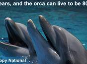 #NationalDolphinDay #April 2017 #Oceans #Oceana #Canada