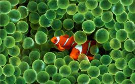 Noses baffled by ocean acidification