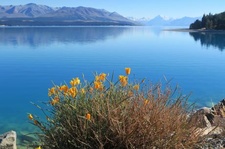 New Zealand: 3,400km of Photos and Logistics