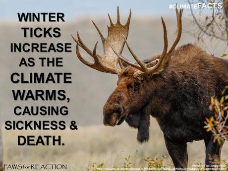 #ClimateFacts series: #ClimateChange #Science #Ticks #Pets and #Wildlife