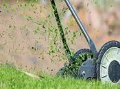 Tips More Perfect Lawn