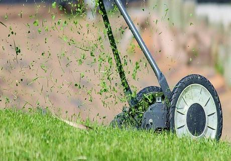 5 Tips for a More Perfect Lawn