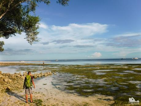 Bluewater Panglao Beach Resort Low Tide