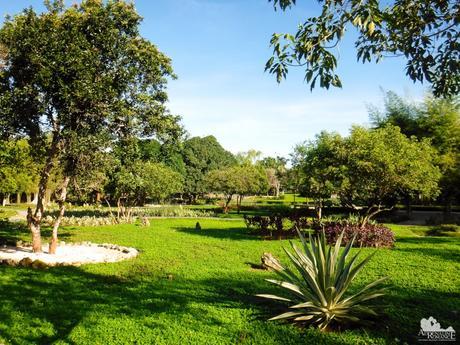 Bluewater Panglao Beach Resort Garden