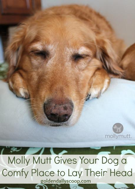 Molly Mutt Gives Your Dog A Comfy Place To Lay Their Head