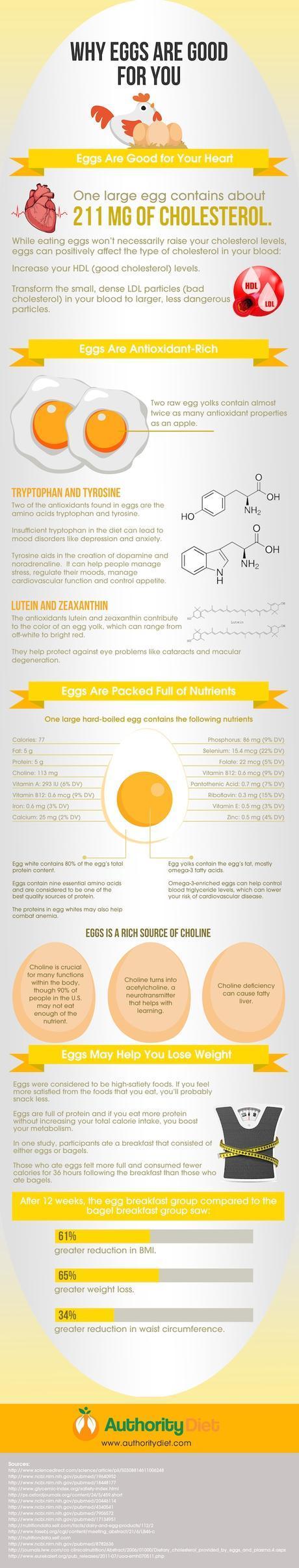 egg infographic