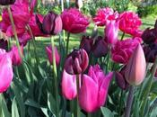 Choosing Next Year's Tulips