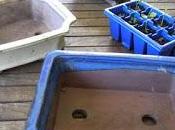 Bonsai Update Risky Repotting
