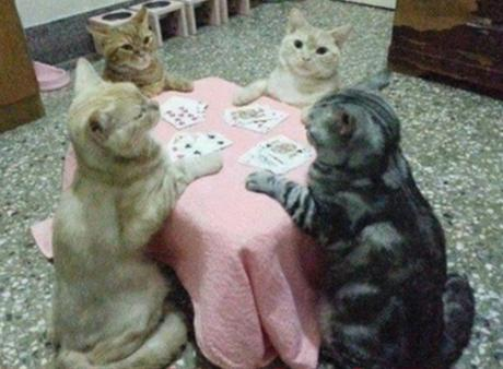 Ten Cute Animals Playing Poker With Their Owners Money