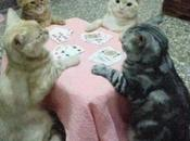 Cute Animals Playing Poker With Their Owners Money