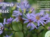 #NationalWildflowerWeek #HowTo Attract #MonarchButterflies #Garden #May7-13