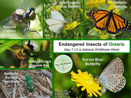 Endangered Insects of Ontario National Wildflower Week May 7-13