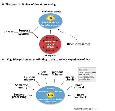 Semantics and the science of fear - the amygdala doesn't 'cause' fear.